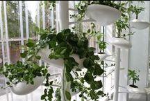Brooklyn Botanic Garden / Vertical Garden exhibit in the new visitor center