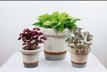 Mush-Bloom Planter Collection / Sustainable Planters GROWN from Organic Mushroom Material