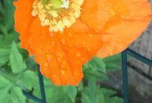 My Garden 2015 / My Garden Pictures for 2015