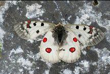 butterflies and butterfly art