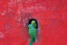 parrots / by Ewa Kozubska