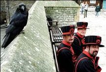 Raven and The Tower / Legend says that the kingdom and the Tower will fall if the six resident ravens ever leave the fortress. It was Charles II, according to the stories, who first insisted that the ravens of the Tower should be protected. - http://www.hrp.org.uk/TowerOfLondon/stories/theravens