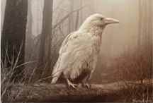 Raven and Albino