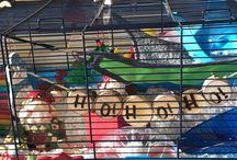 Hamster Cage Set Ups