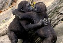 Love, Hug's & Kisses / Everything that an animal to child & person need's while they live in a friendship,relationship & marrige .
