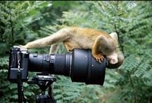 Take me away-camera
