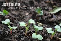 Growing from Seed / Grow your own vegetables, herbs and greens from seed