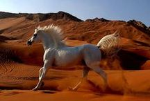 HORSES / by hamoudy younis