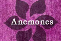 Gumpaste-Fondant Anemones / A Collection of Gumpaste-Fondant Anemone Flowers