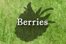 Gumpaste-Fondant Berries / A Collection of Assorted Gumpaste-Fondant Berries