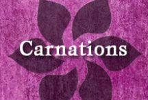Gumpaste-Fondant Carnations (Dianthus) / A Collection of Gumpaste-Fondant Carnation Flowers