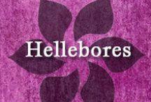 Gumpaste-Fondant Hellebores (Christmas Roses) / A Collection of Gumpaste-Fondant Christmas Rose Flowers (Hellebores)