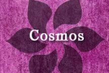 Gumpaste-Fondant Cosmos / A Collection of Gumpaste-Fondant Cosmos Flowers