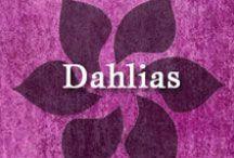 Gumpaste-Fondant Dahlias / A Collection of Gumpaste-Fondant Dahlia Flowers