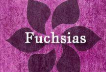 Gumpaste-Fondant Fuchsias / A Collection of Gumpaste-Fondant Fuchsia Flowers