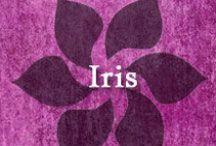 Gumpaste-Fondant Iris / A Collection of Gumpaste-Fondant Iris Flowers