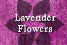 Gumpaste-Fondant Lavender Flowers / A Collection of Gumpaste-Fondant Lavender Flowers