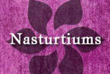 Gumpaste-Fondant Nasturtiums / A Collection of Gumpaste-Fondant Nasturtium Flowers