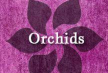 Gumpaste-Fondant Orchids / A Collection of Assorted Gumpaste-Fondant Orchid Flowers (Moth, Cymbidium, Cattelya)