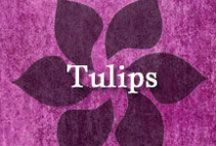 Gumpaste-Fondant Tulips / A Collection of Gumpaste-Fondant Tulip Flowers