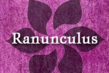 Gumpaste-Fondant Ranunculus / A Collection of Gumpaste-Fondant Ranunculus Flowers