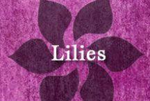 Gumpaste-Fondant Lilies / A Collection of Assorted Gumpaste-Fondant Lily Flowers (Tiger, Stargazer, Oriental, Casablanca)