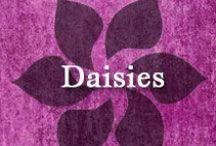 Gumpaste-Fondant Daisies / A Collection of Gumpaste-Fondant Daisy Flowers