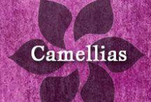 Gumpaste-Fondant Camellias / A Collection of Gumpaste-Fondant Camellia Flowers