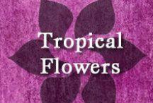 Gumpaste-Fondant Tropical Flowers / Assorted Tropical Flowers made out of Gumpaste-Fondant.