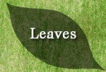 Gumpaste-Fondant Leaves (Foliage) / A Collection of Assorted Gumpaste-Fondant Leaves and Foliage