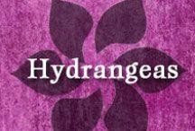 Gumpaste-Fondant Hydrangeas / A Collection of Gumpaste-Fondant Hydrangea Flowers