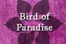 Gumpaste-Fondant Bird of Paradise / A Collection of Gumpaste-Fondant Bird of Paradise Flowers