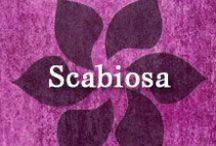Gumpaste-Fondant Scabiosa (Pincushion) / A Collection of Gumpaste-Fondant Scabiosa (Pincushion) Flowers