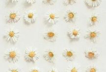 Daisy maze / Delicate and cute like some hearts
