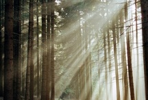 Spiritual, Inspiring, Educational / by Sharon Rains