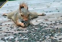 i  love squirrel's / by Monica Greer