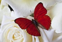 WJ ~ MY RED & WHITE OBSESSION / by Wende Jackson