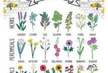 bees / Beekeeping, bee art, bee tips, and bee beauty
