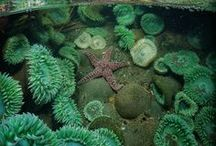 Marine Magic / From rocky shores to ocean depths, the sea is a mystical place full of inspiring creatures.