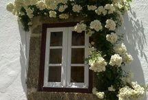 Flowers-kukat