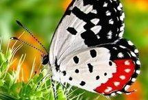 Insectos / Los insectos comprenden el grupo de animales más diverso de la Tierra.  Los insectos  son una clase de animales invertebrados del filo de los artrópodos, caracterizados por presentar un par de antenas, tres pares de patas y dos pares de alas (que, no obstante, pueden reducirse o faltar). La ciencia que estudia los insectos se denomina entomología.   / by Marlen Soto Barquero