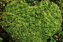 Moss-Sammal / Love moss, it's beautiful <3