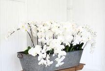 Kwiaty -Flowers