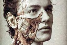 Anatomy / by Jaspley