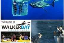 Activities & Adventure / Day trips, whale watching, great white shark cage diving, golf, adventure sports, hiking, camping, trails, mountain biking and much more
