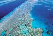 океан подводный мир