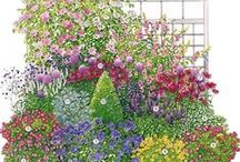 сад цветы композиции