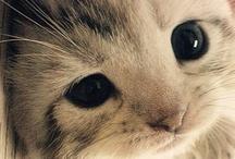 Cutie animals :) / by Kelsey Lynn
