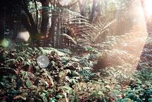 Waldlandschaft / forest landscape / Packe auf www.bagtion.de eine Eule in deinen Koffer um an deinem perfekten Reiseziel bzw. bei deinem perfekten Hotel eine Waldlandschaft zu haben. /// Pack on www.bagtion.com an owl into your suitcase to have a forest landscape at your perfect travel destination or at your perfect hotel. / by BAGTION! Spielend verreisen.