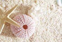 Summer Decor//Beach